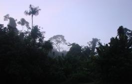 3. Boven Suriname - Suriname Rivier s morgens vroeg (4)