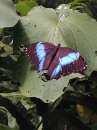 7. vlinder tuin (Lelydorp) (25)