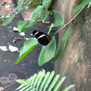 7. vlinder tuin (Lelydorp) (6)
