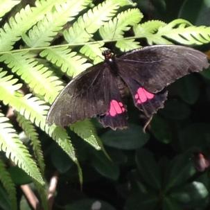 7. vlinder tuin (Lelydorp) (8)