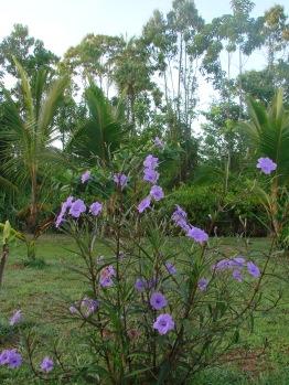 2. Fietsen door Commewijne - plantage Visserszorg (111)